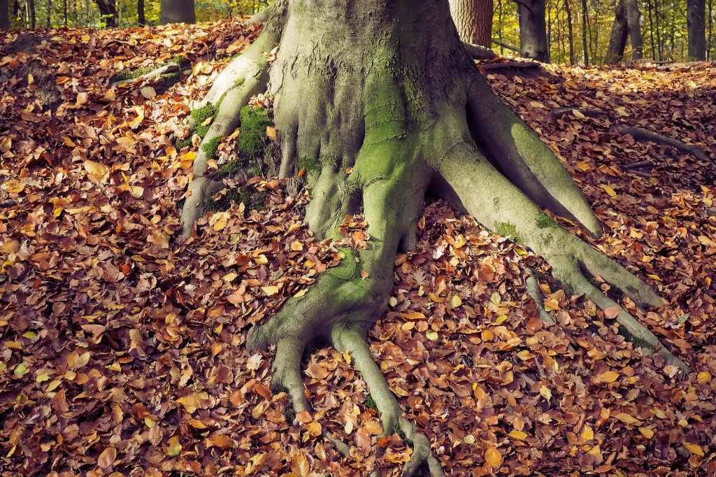autumn-1827212_1920